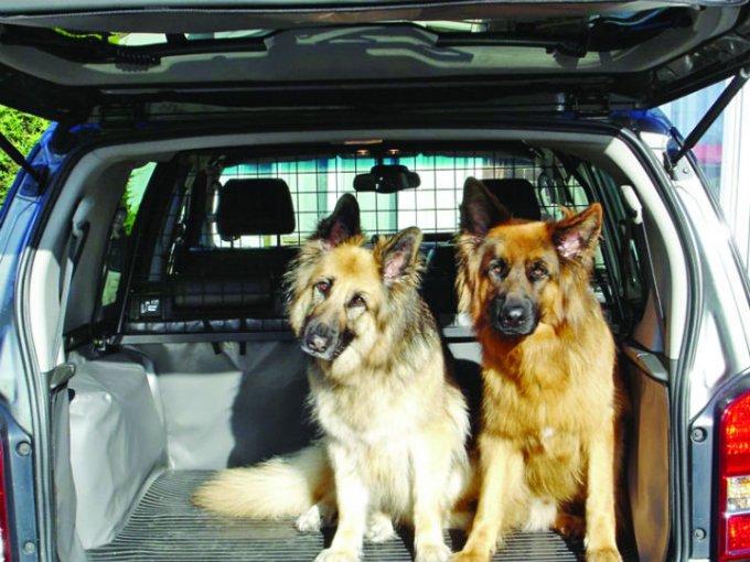 Aprende a quitar de la constituye adecuada los pelos que tu mascota libera cuando viaja contigo en el auto